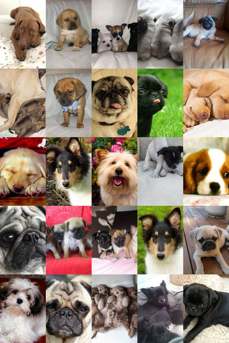 Read Only This Article About Dogs And You'll Know It All
