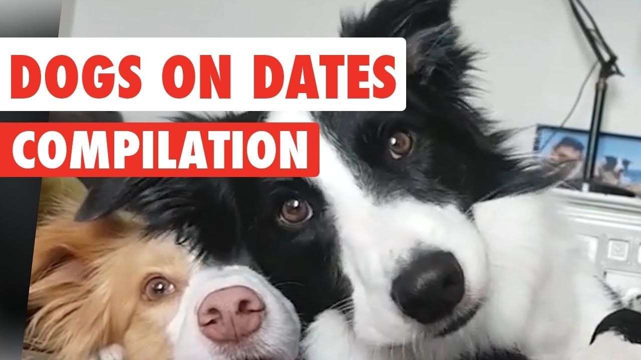 Dogs On Dates Video Compilation 2017 Dogs, Animals, Dating