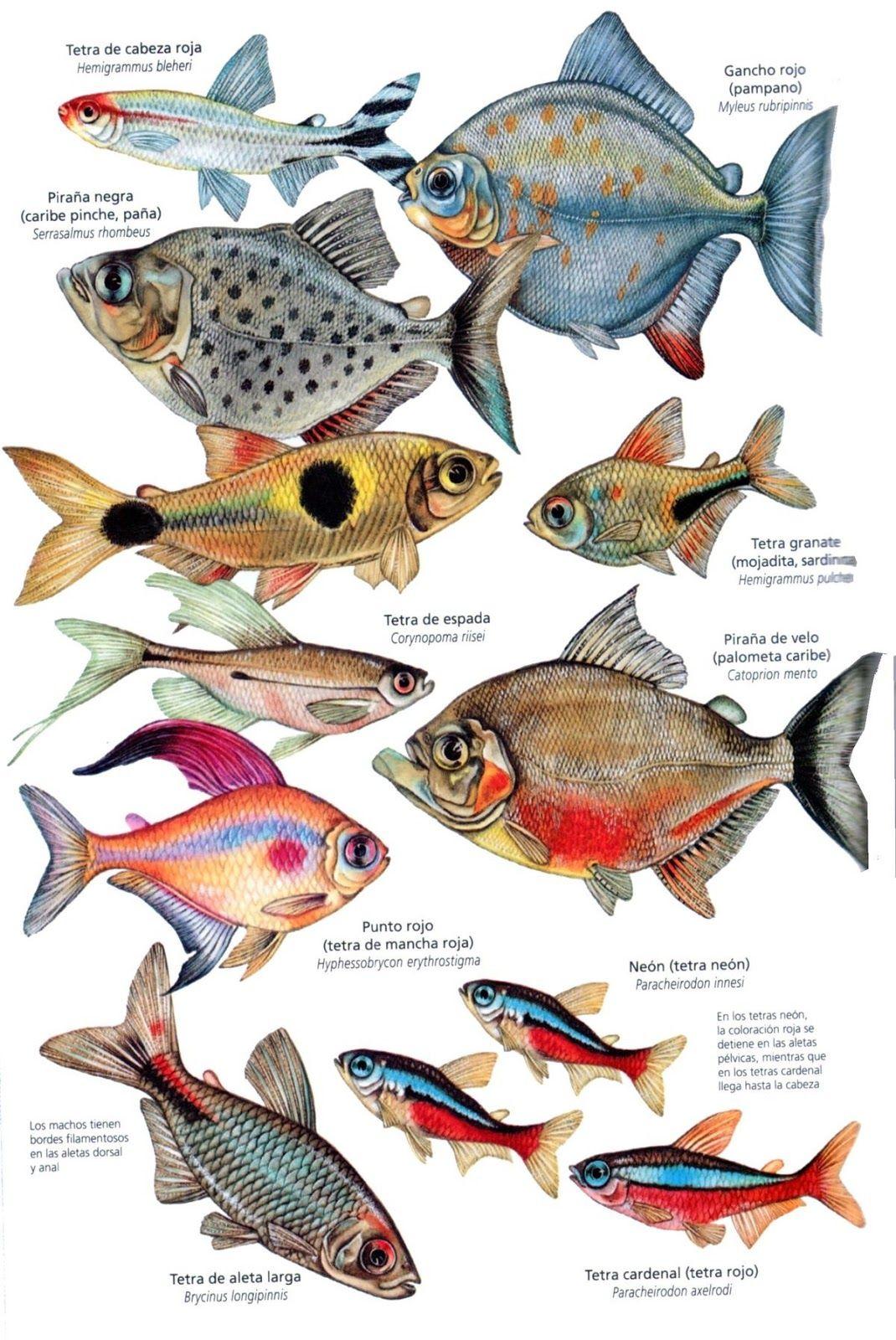 Peixe Fish Fish Artwork Fish Drawings Drawn Fish