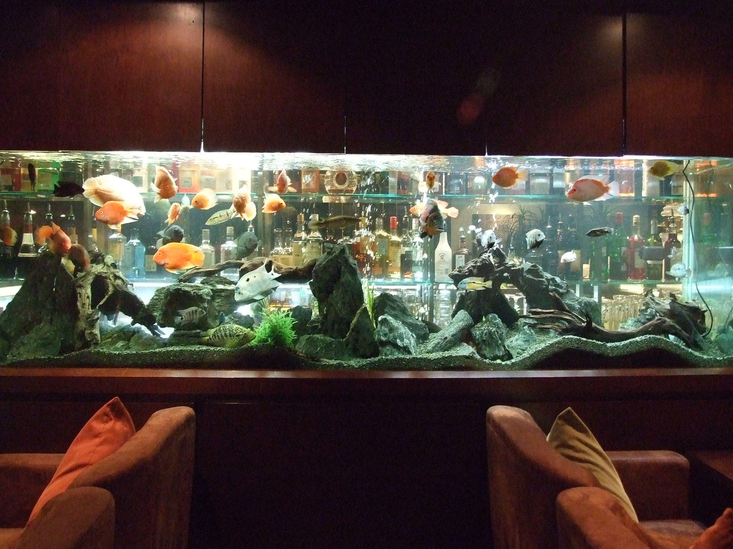 Acrylic Fish Tanks – High Quality Acrylic Aquariums Factory Direct