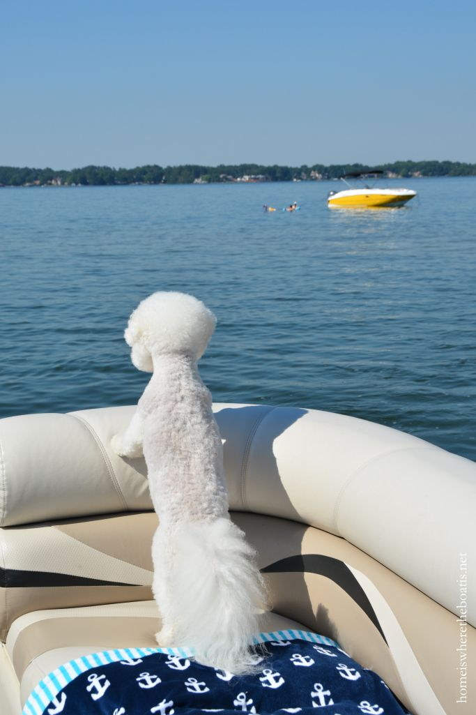 Boating with dogs homeiswheretheboatis.net #boat #BichonFrise