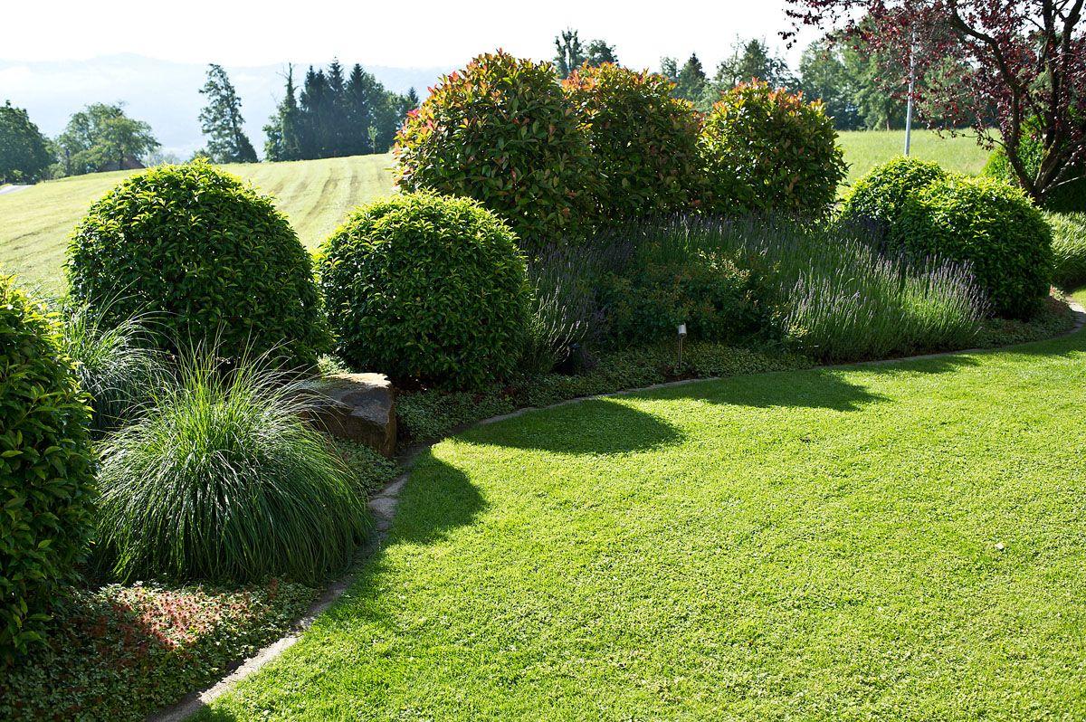 bäume sichtschutz Google Suche garden ideas
