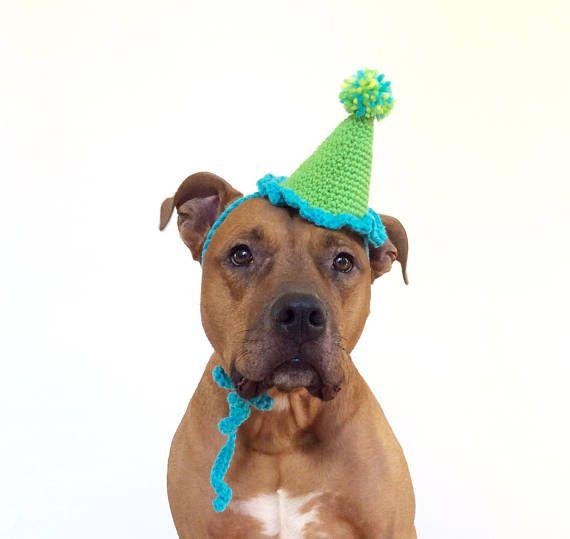 Birthday Party Hat For Dogs Gotcha Day Dog