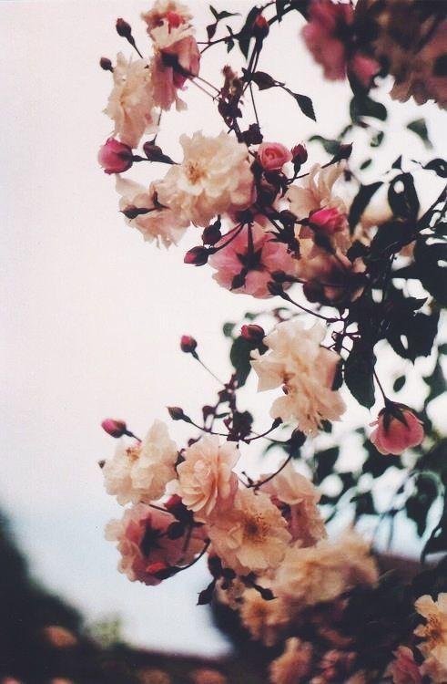 Les Amoureux Aux Fleurs Devant La Fenetre Cherry Blossom Girl