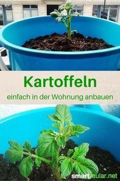 Kartoffeln im Eimer anbauen, so klappt es sogar in der Wohnung #kräutergartenpalette