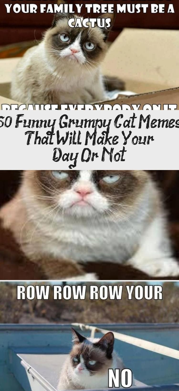 50 Funny Grumpy Cat Memes That Will Make Your Day… Or Not