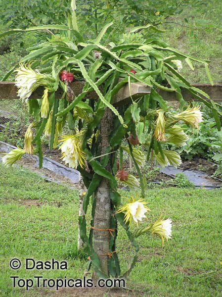 Pin Em Plants N Flowers 400 x 300