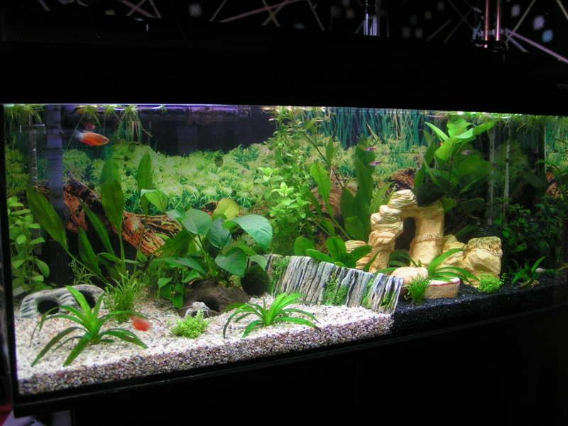 Ideas for aquarium d cor with white sand http for Aquarium decoration idea