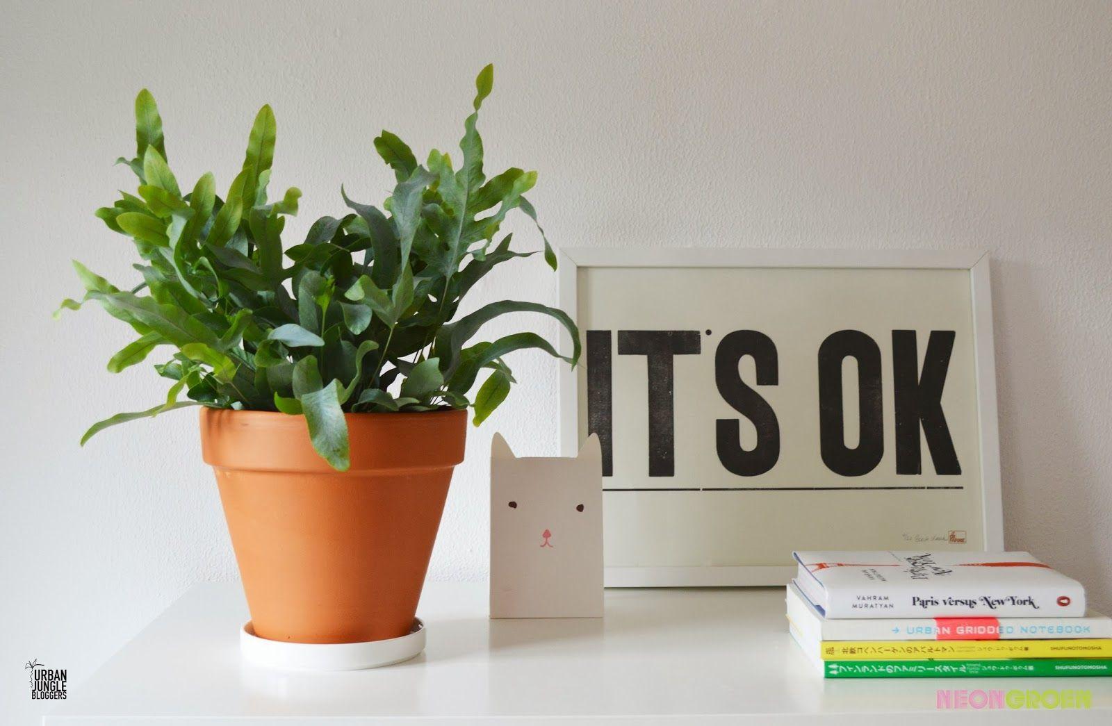 NeongroeN: Urban Jungle Bloggers 1 Plant - 3 Stylings