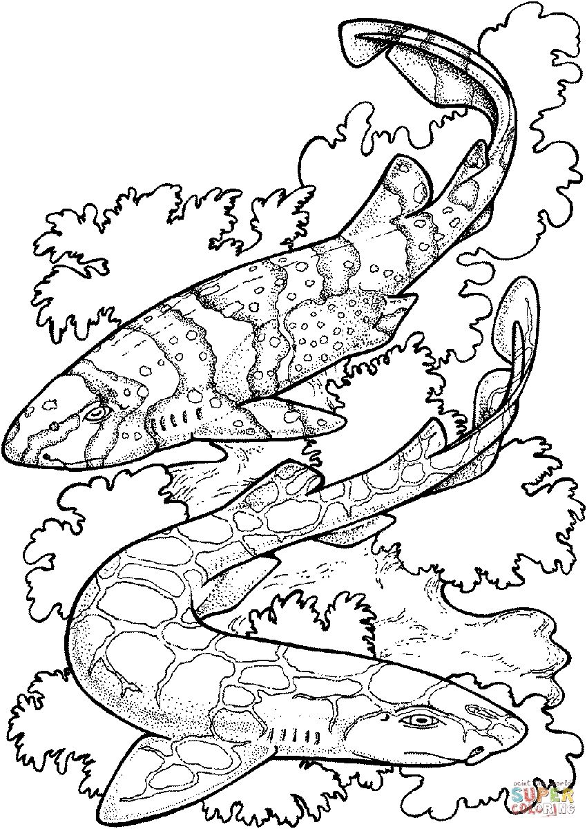 Zebra Shark Coloring Pages | Adult Coloring -- Blank Pages to Color ...