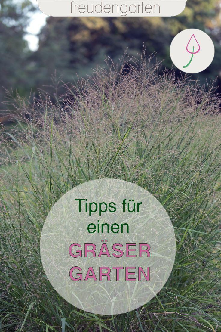 Ziergraser Fur Den Garten Garten Graser Im Garten Und Graser Pflanzen