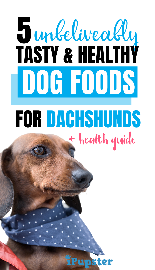 Best Dog Food For Dachshunds For 2020 Top 5 Vet Recommended Foods Best Dog Food Dog Food Recipes Healthy Dog Food Recipes