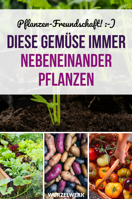 28 Gemüsearten und ihre wirksamsten Mischkultur-Partner + Beispielplan - Wurzelwerk