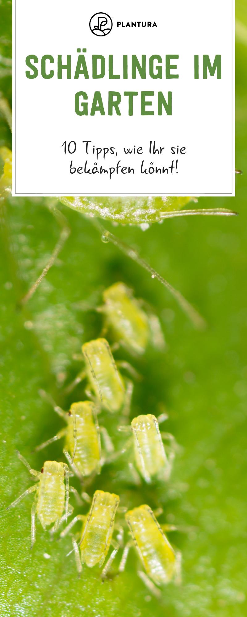10 Hausmittel Gegen Schadlinge Im Garten Schadlinge Im Garten Ameisen Im Garten Garten