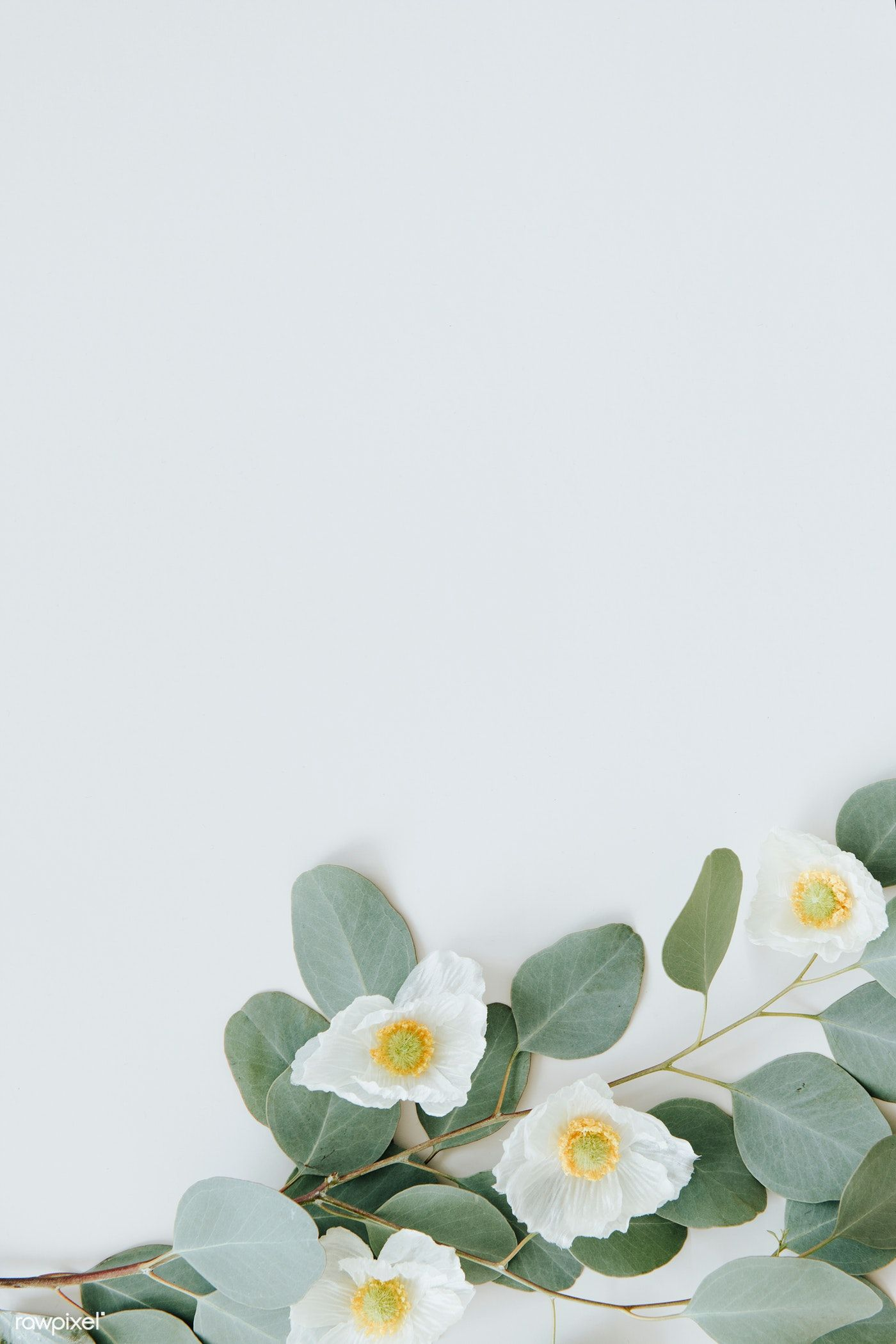 Pin By C M E On The Wedding White Flower Background Flower
