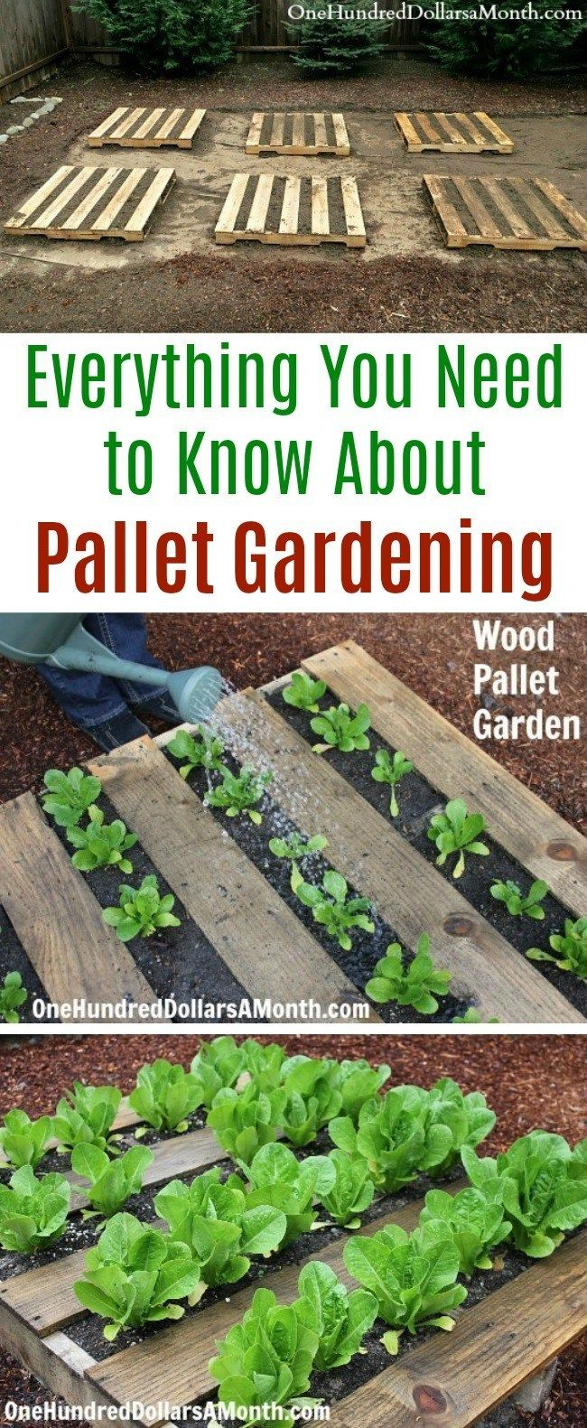 Everything You Need to Know About Pallet Gardening - One Hundred Dollars a Month
