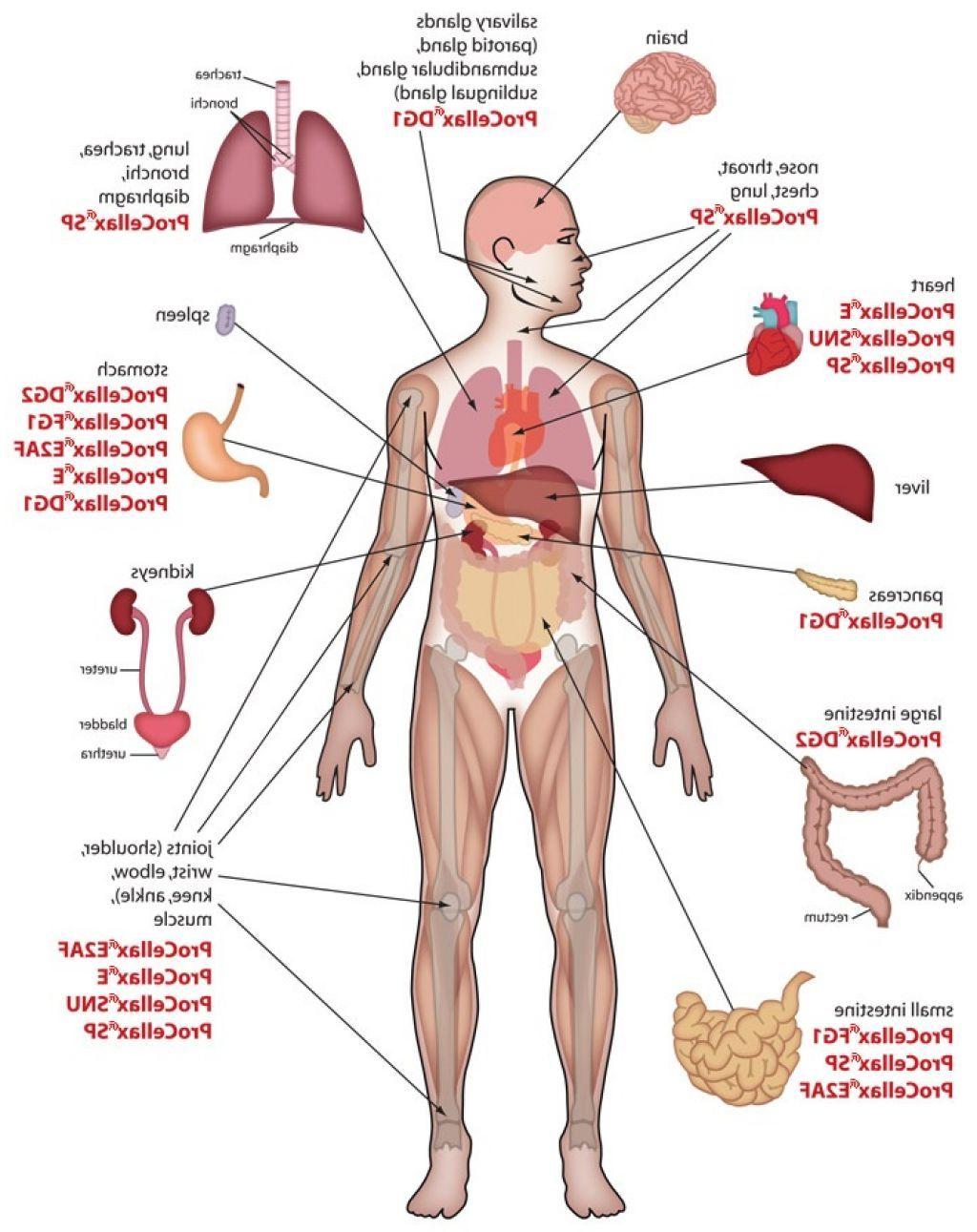Map Body Organs Human Body Anatomy Pinterest Human Body Human