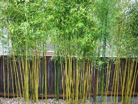 Garden Plot: Bamboo lawyers and bare spots