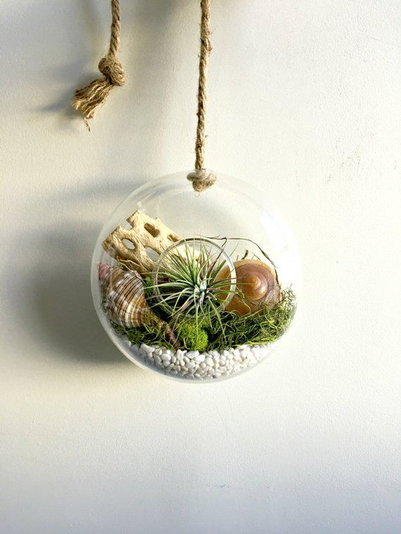 "Moss /& Sea Shells Hanging Air Plant Terrarium with Sea Fan 10/"" Nautical"