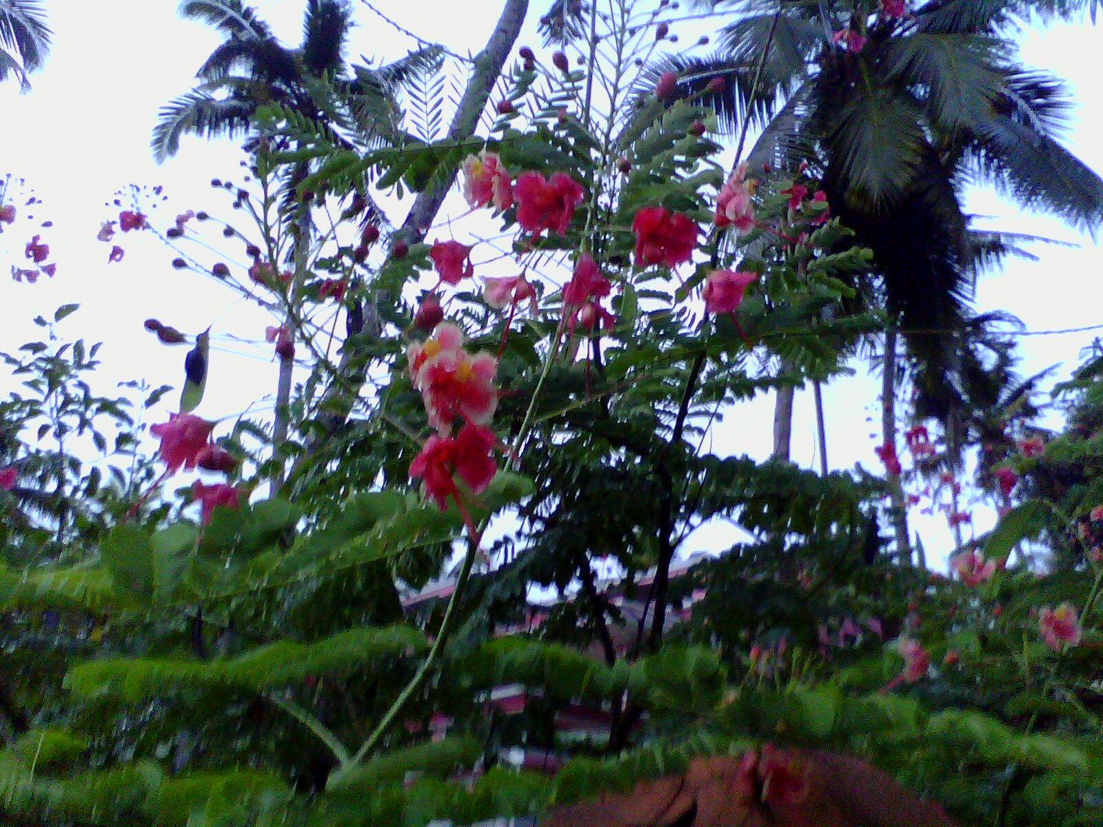 Kerala flowers Organic farming, Flowers, Organic vegetables