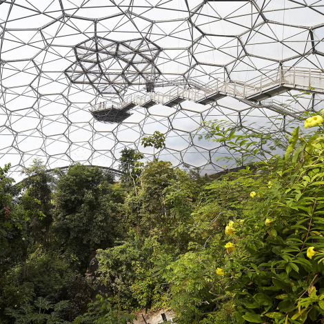 A wide shot of the inside of the Rainforest Biome including the rainforest canopy and & A wide shot of the inside of the Rainforest Biome including the ...