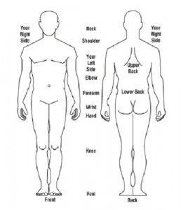 outline of the human body printable anatomy pinterest human body