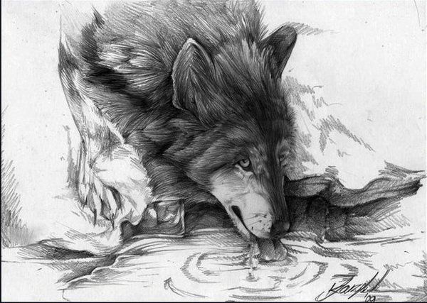 Buy Drawings awesome of wolves photo pictures trends
