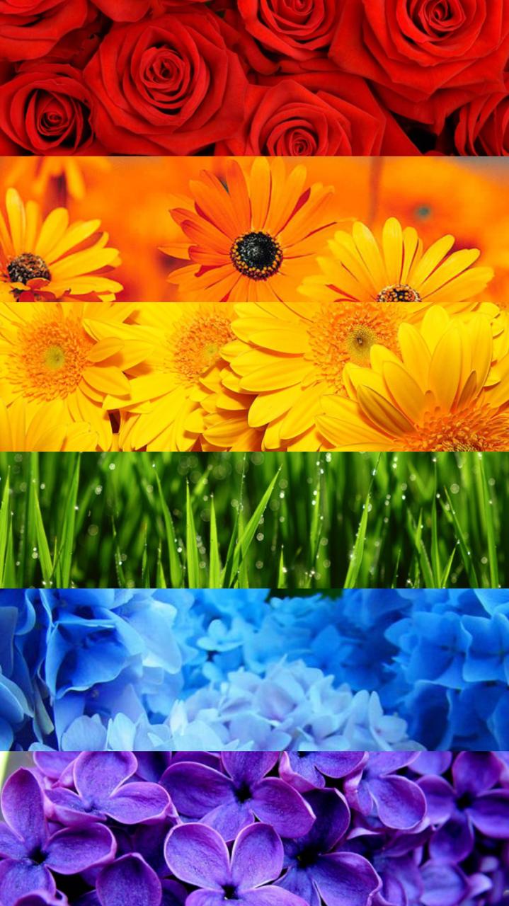 lunarcassiopeia: Free Pride Flower Wallpapers ... :: Pride ...