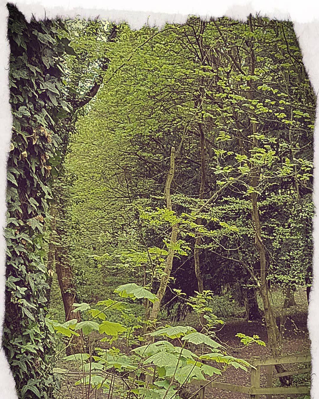 Shipley Park Trees Tree Photography Photo Amateurphotography