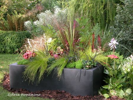 Comme des mini jardins le jardin de sylvie fontaine for Plante terrasse hiver