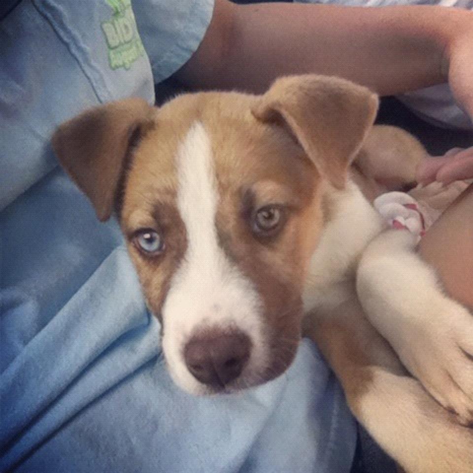 nike 12 weeks old husky/american bulldog mix | animals i love