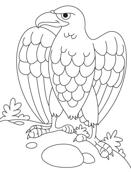 Bald eagle coloring page download free bald eagle coloring page for kids best coloring