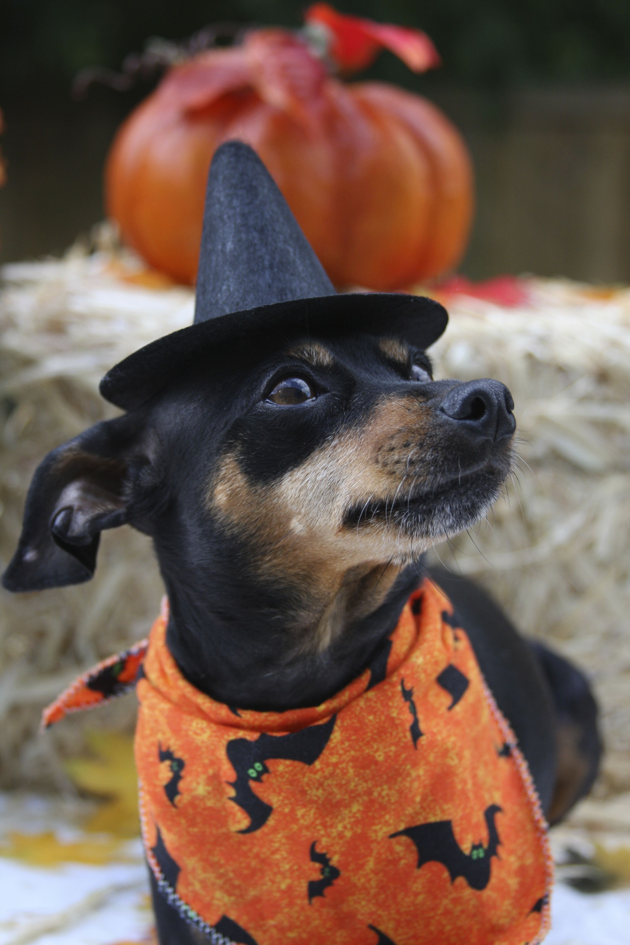 Halloween Costume Contest 2014 Funny Dogs Daily Cute Animals