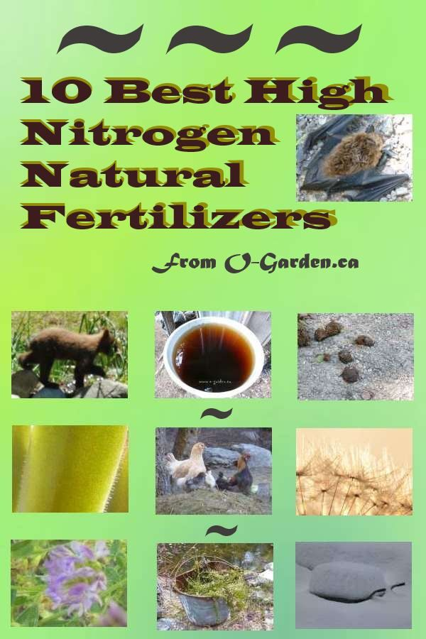what plant food is high in nitrogen