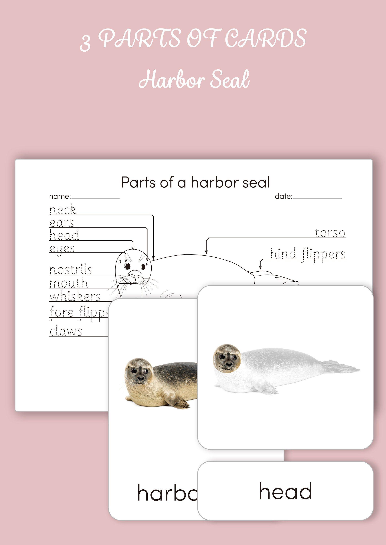 Montessori 3 Part Cards Parts Of A Harbor Seal