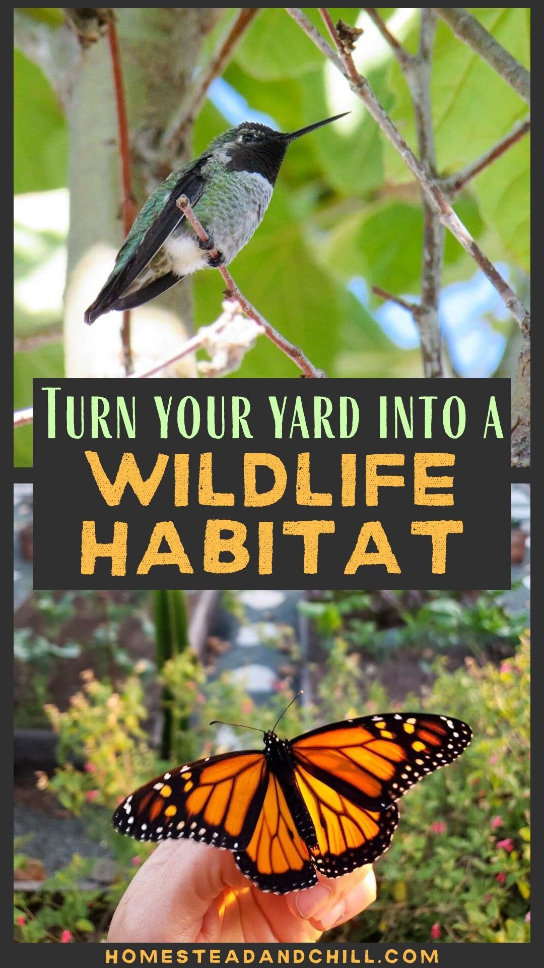 How to Turn Your Yard or Garden into a Certified Wildlife ...