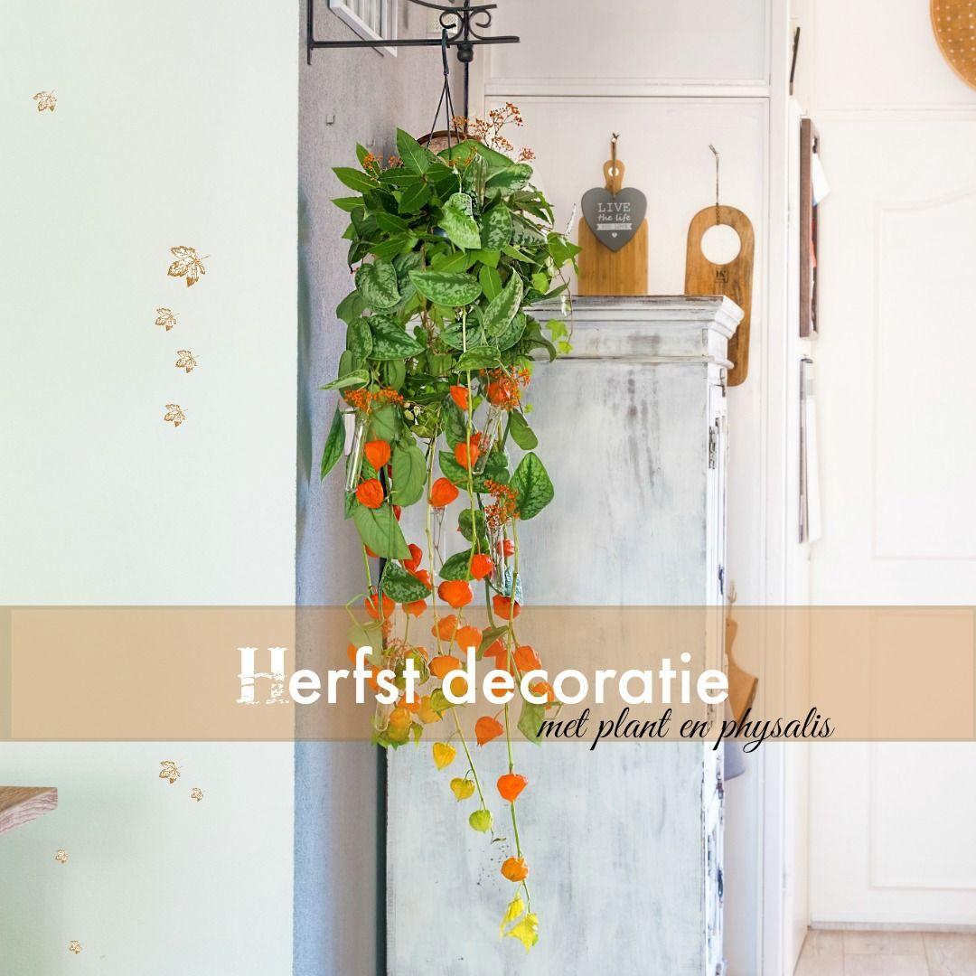 Herfst decoratie met plant en physalis (lampionnetjes). – ElsaRblog