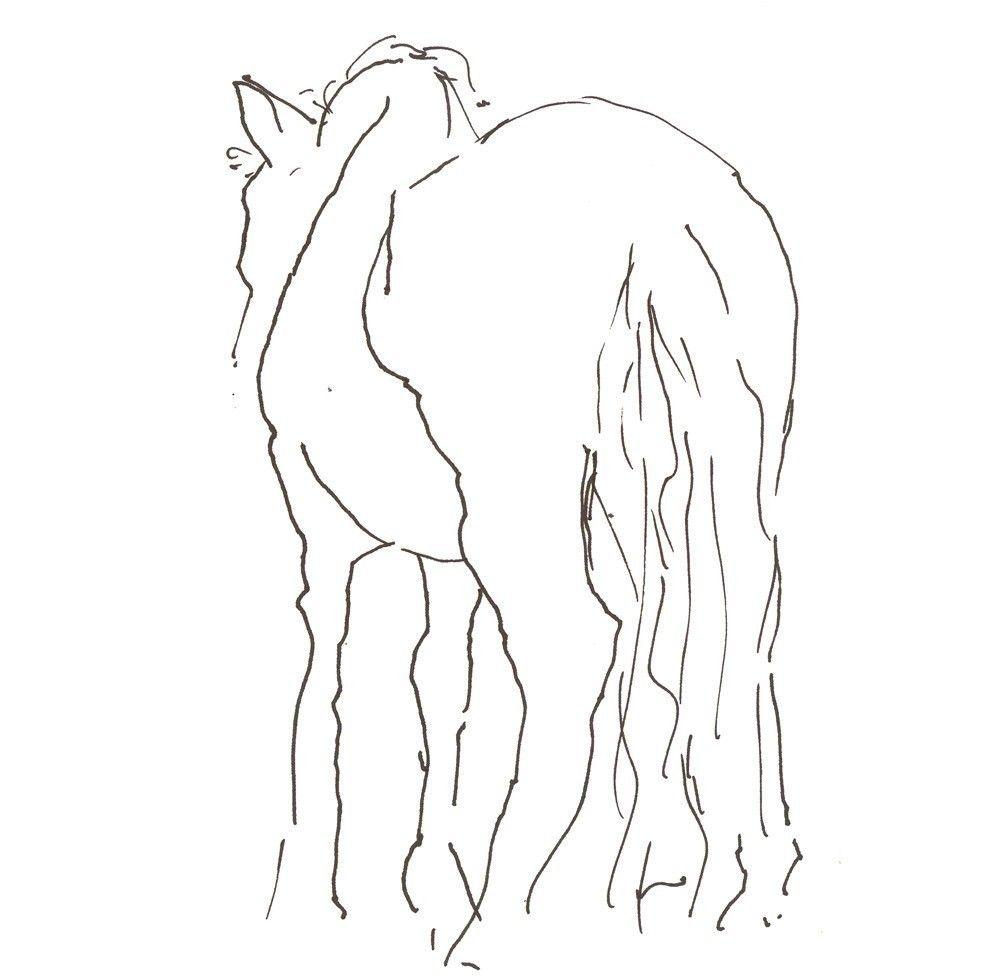 shy horse 8x10 art print gesture line drawing horse drawings