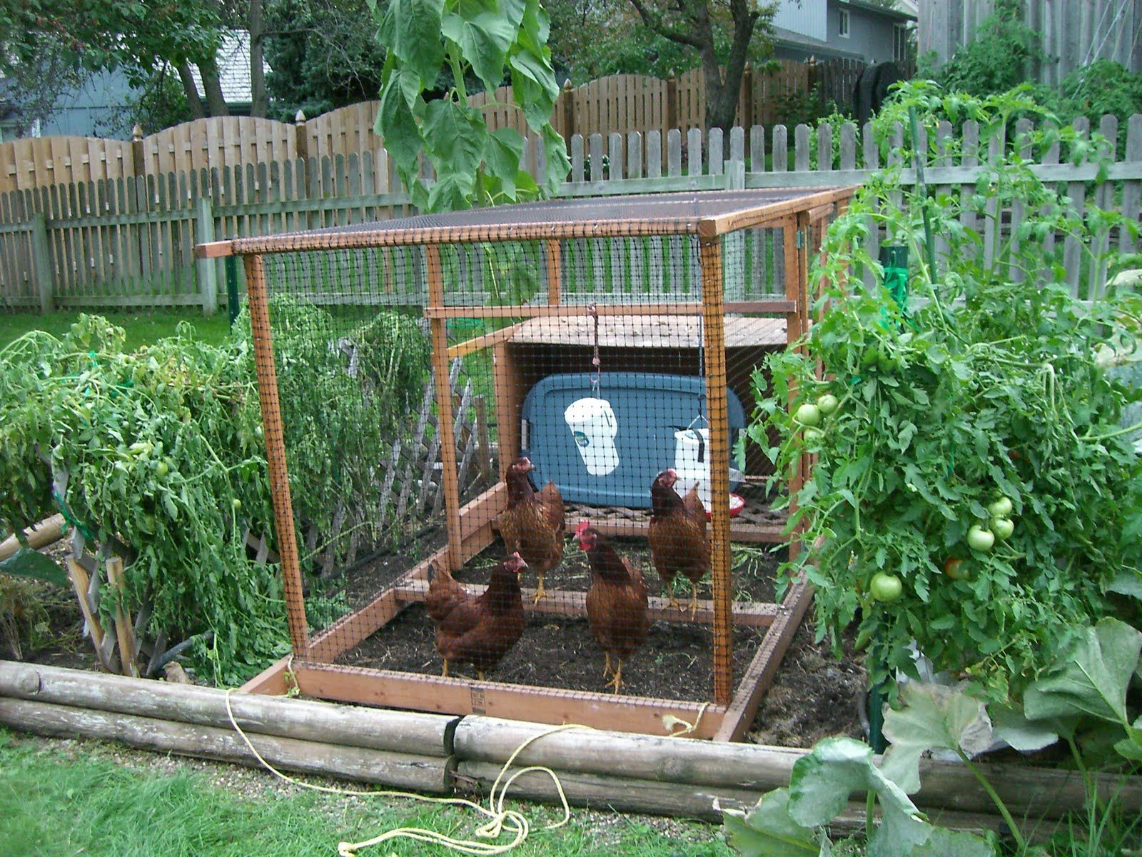 Backyard Vegetable Garden Design - New Home Rule ...