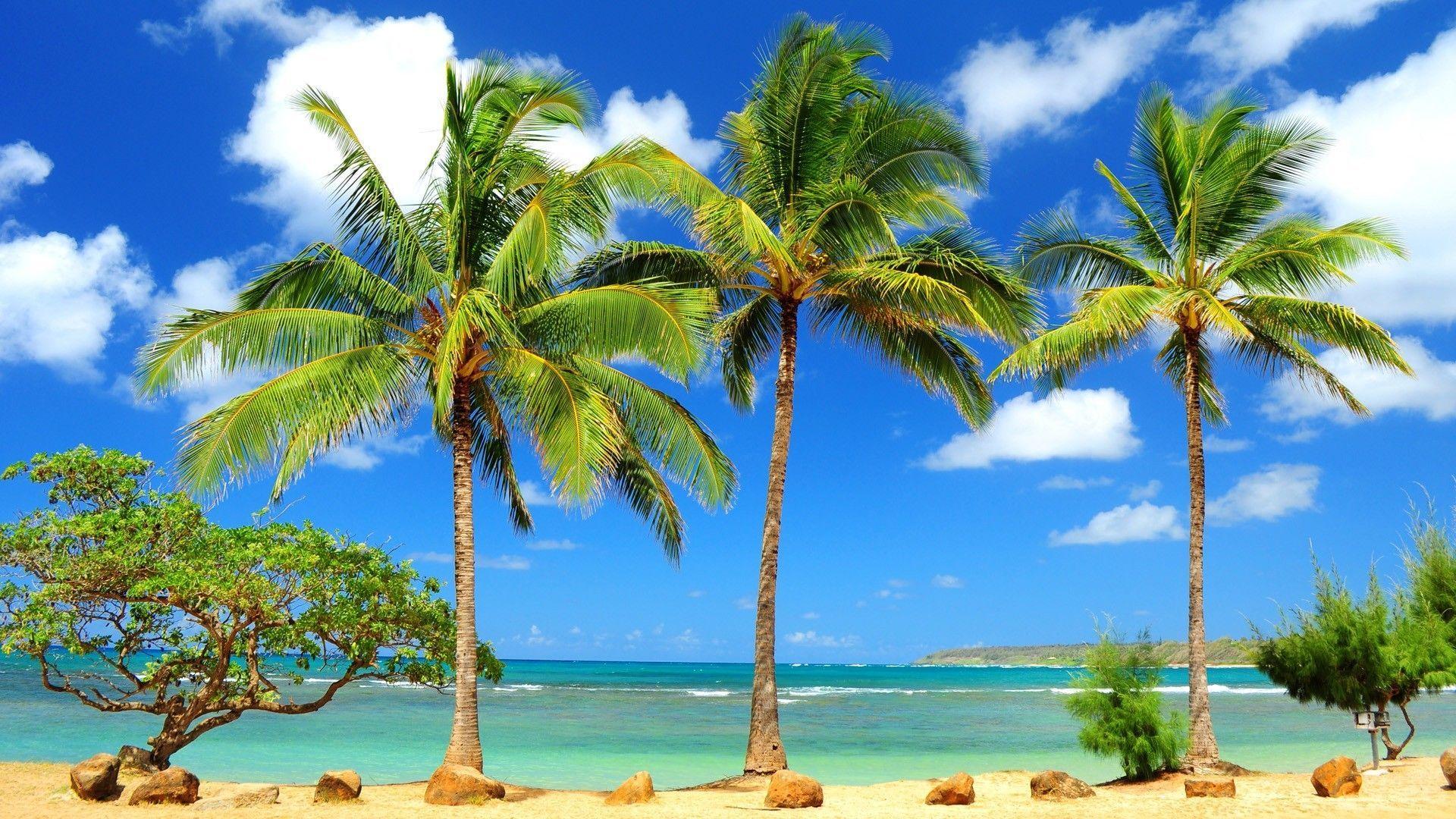 Tropical Beach Paradise HD desktop wallpaper Widescreen