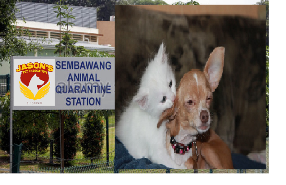 Pin On Animal Quarantine Singapore