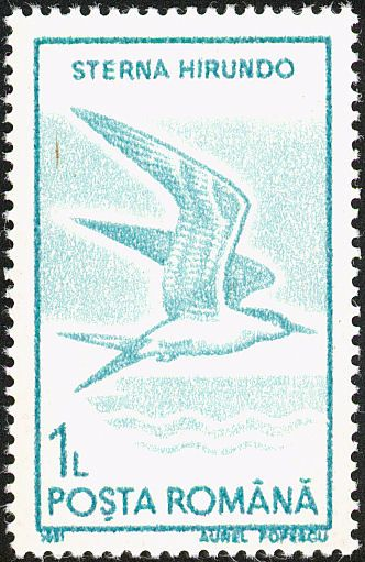 Common Tern stamps - mainly images - gallery format