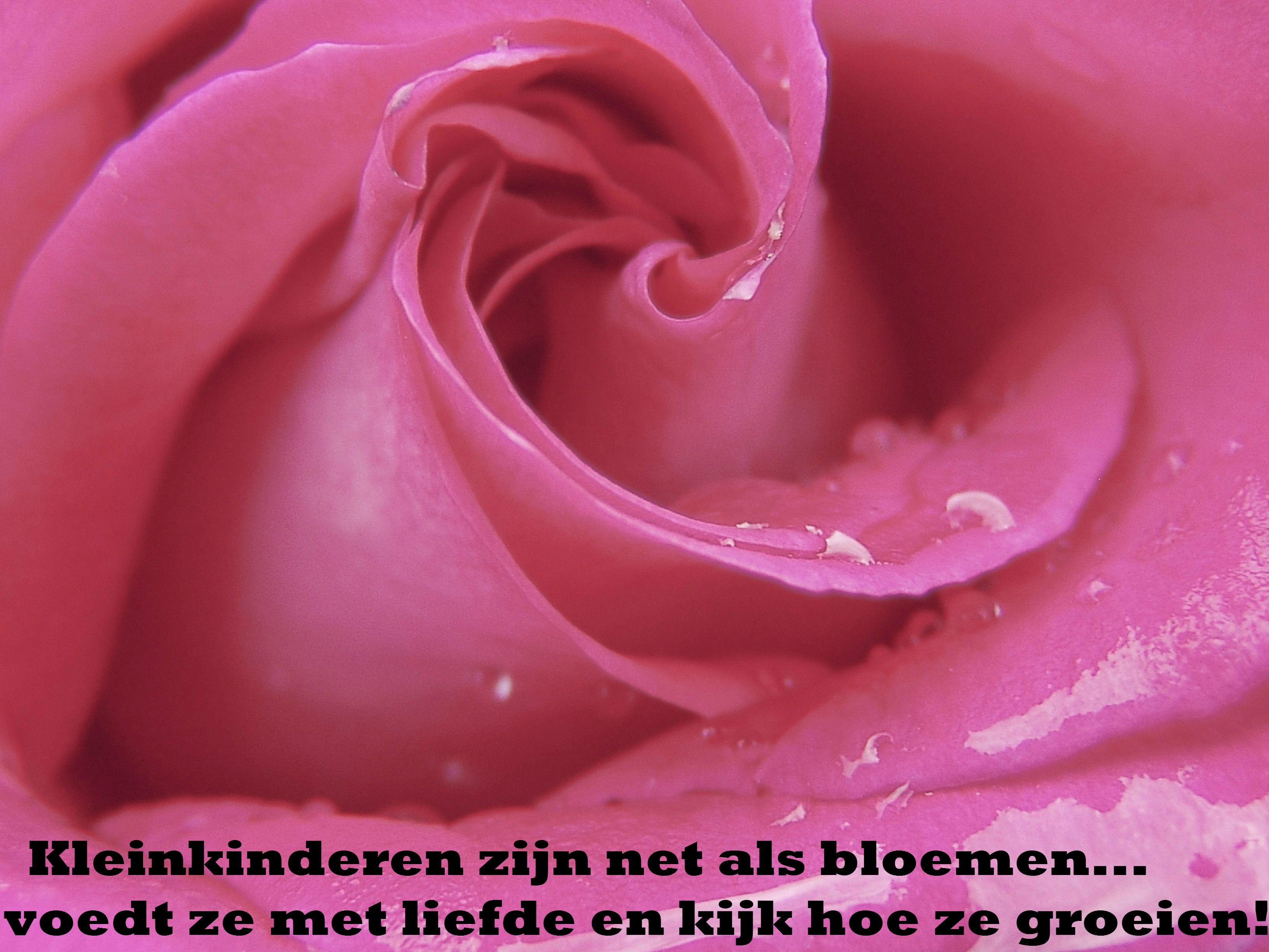 Kleinkinderen zijn net als bloemen. Voedt ze met liefde en kijk hoe ze groeien! www.omasoppastas.nl