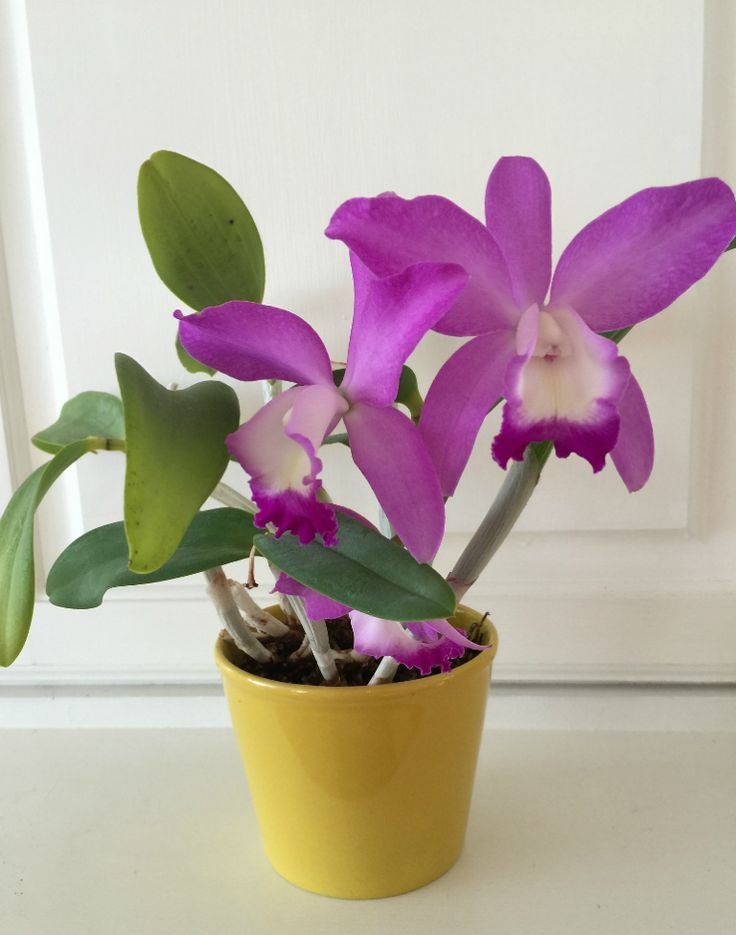 How to Grow Orchids - a Beginner's Guide #growingorchids