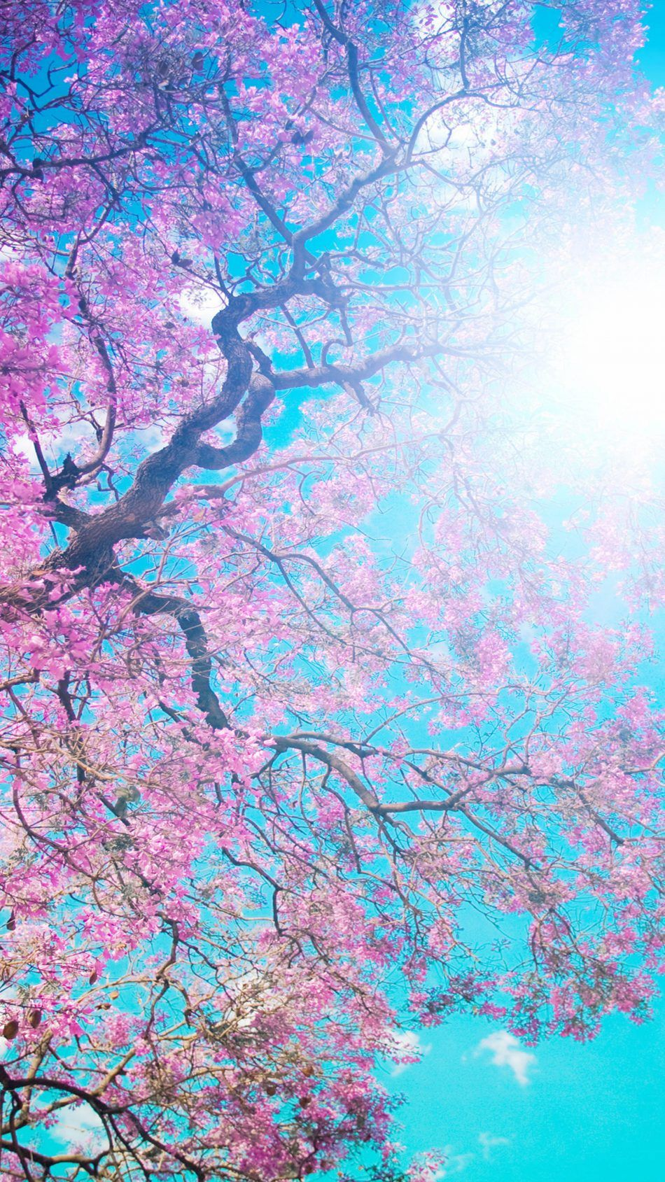 Download Tree Sunny Spring Day Free Pure 4k Ultra Hd Mobile