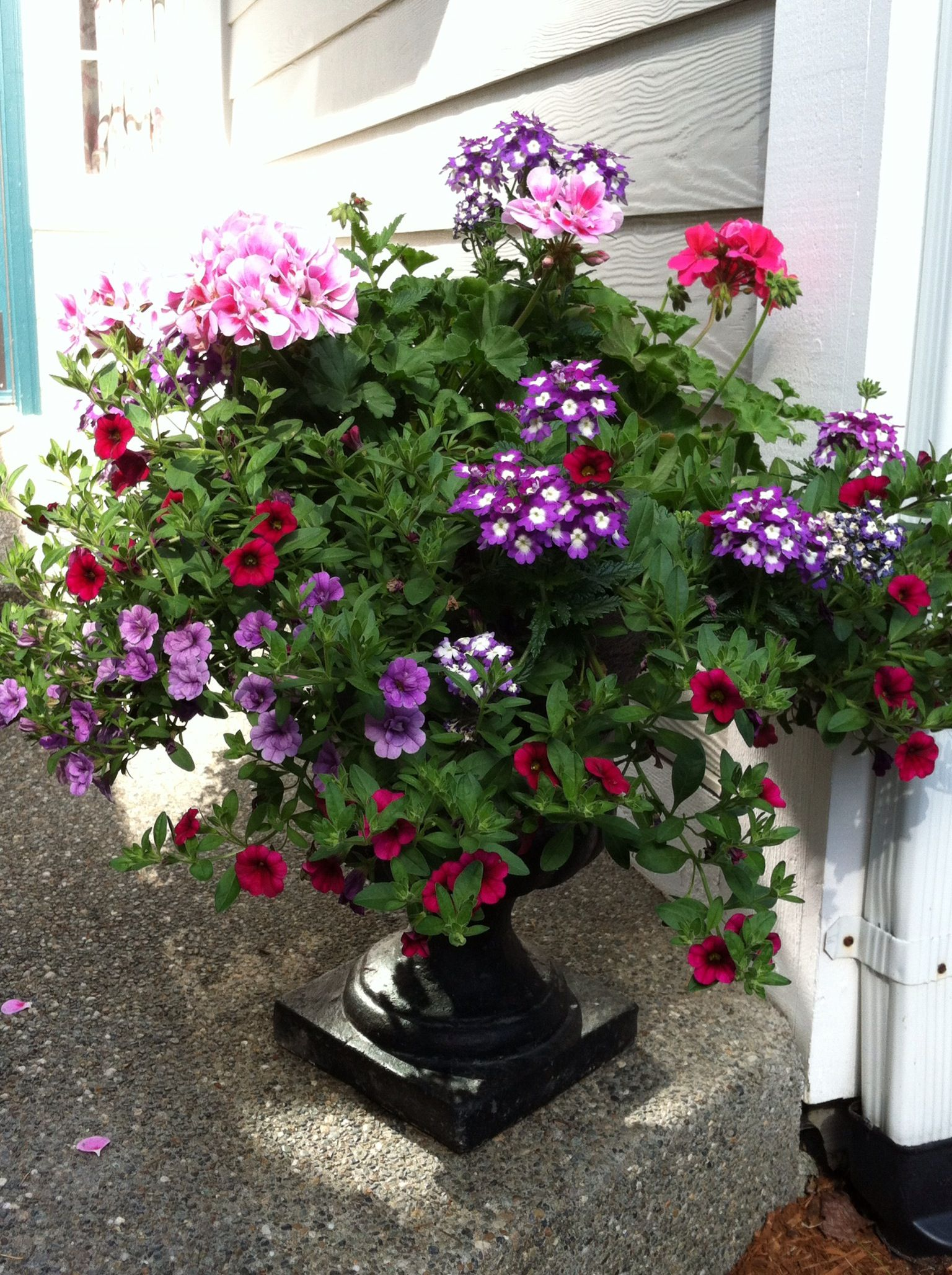 I Bought Hanging Baskets From Costco For 19 99 And 640 x 480