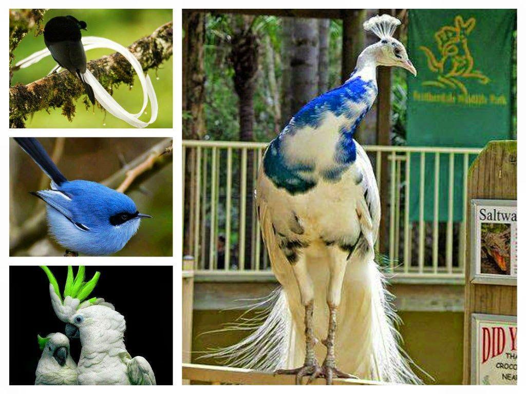 موسوعة أجمل صور طيور برية نادرة بألوان رائعة مداد الجليد Beautiful Birds Birds Bird