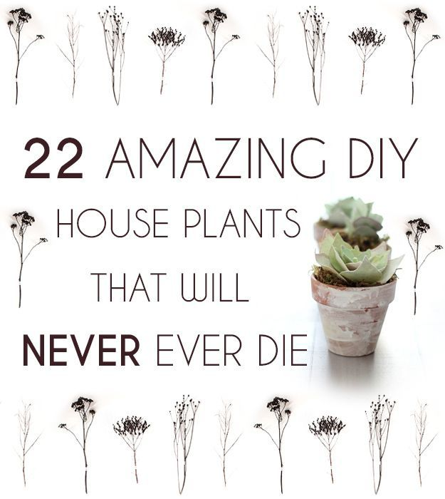 22 Incredible Budget Gardening Ideas: 22 Amazing DIY House Plants That Will Never Ever Die