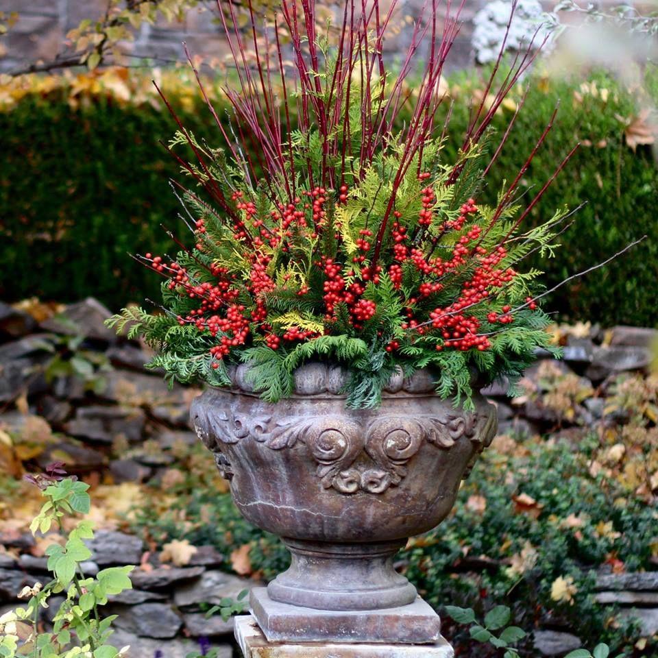 Laura from Garden Answers winter arrangement Christmas