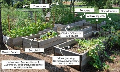Growing Food: Lessons Learned. Vegetable Garden ...